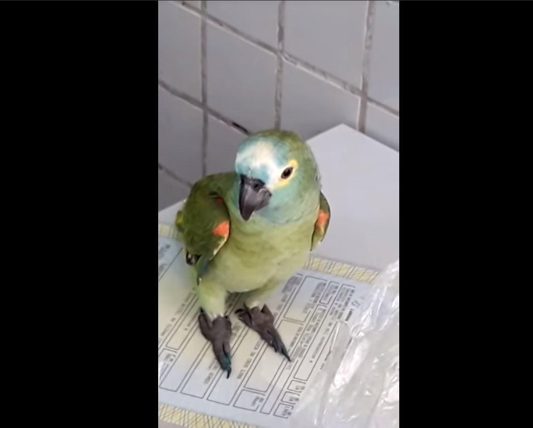 Papagaio é apreendido ao tentar impedir prisão de traficantes