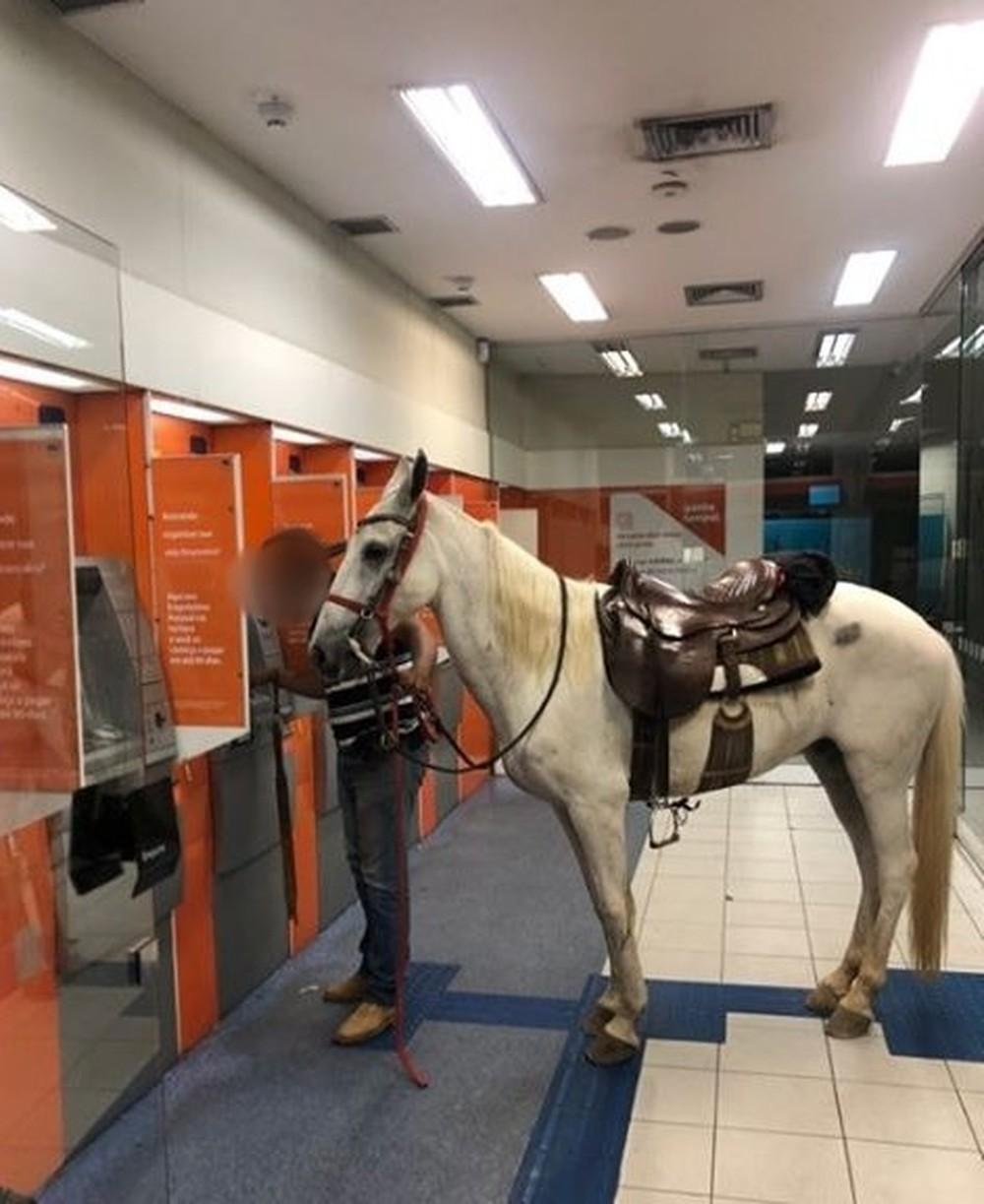 Dono levou cavalo para agência bancária em Várzea Paulista
