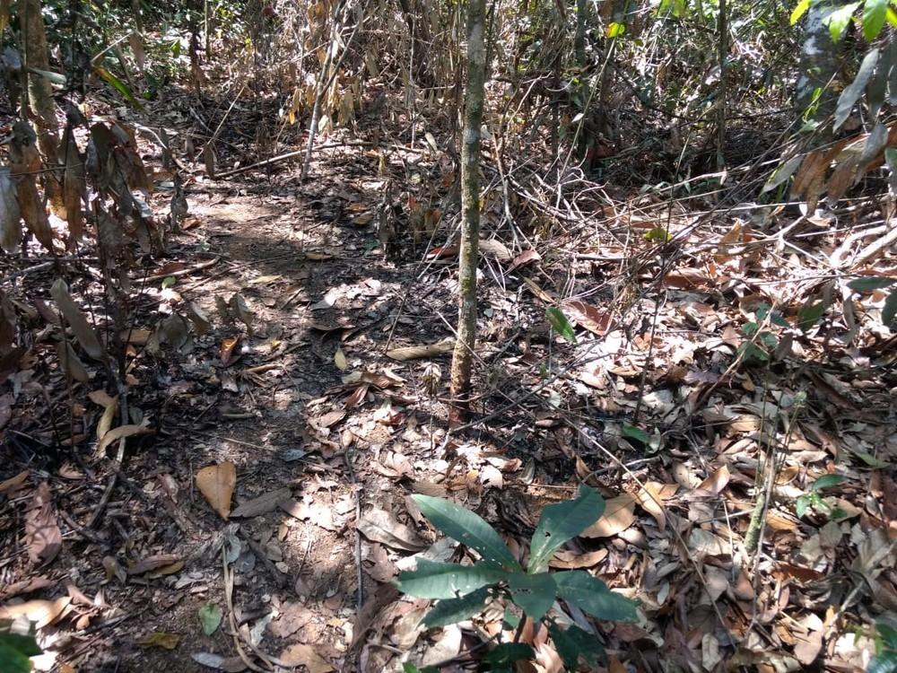 Ossada foi encontrata em matagal de dificil acesso