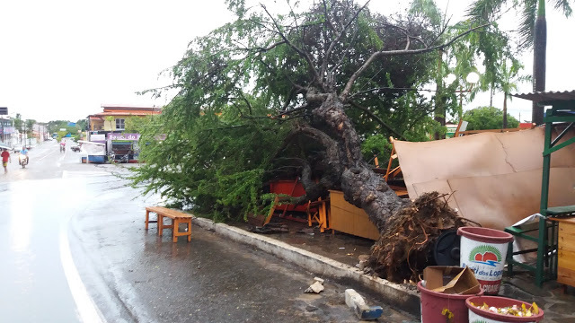 Chuva e ventos fortes arrancam árvores e destrói barracas em Buriti dos Lopes