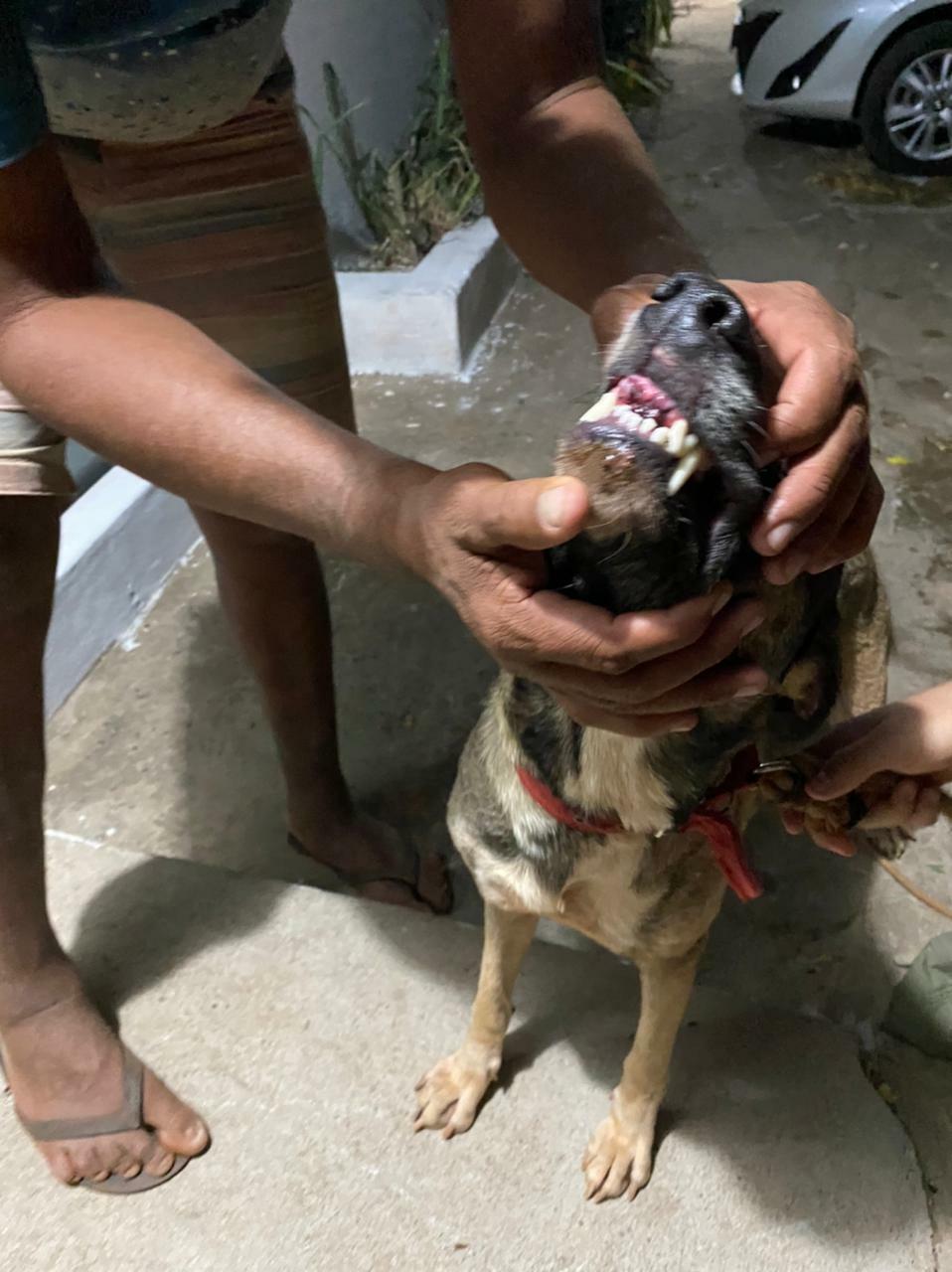 Cachorro alvo dos maus-tratos