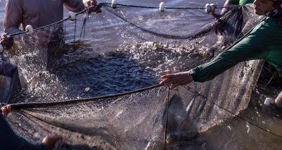 Thumb pescaria   divulga o governo do mato grosso