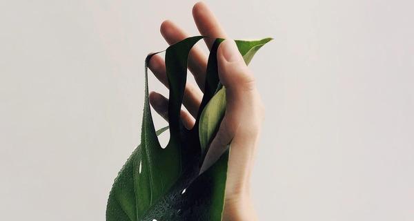 Medium mao folha planta