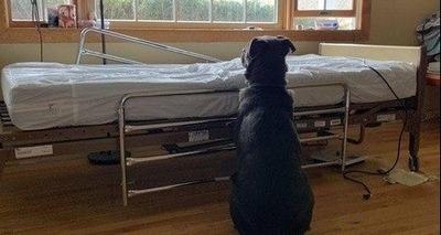 Thumb cachorro cao abandono adocao morte 21062019190807759