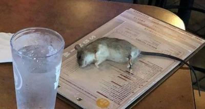 Thumb xblog rat.jpg.pagespeed.ic.2puxlxc 5n