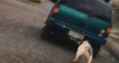 Thumb cachorro arrastado