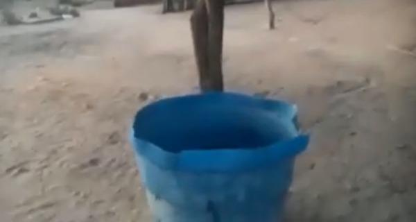 Medium alvorada falta de gua