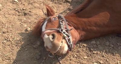 Thumb cavalo dram tico