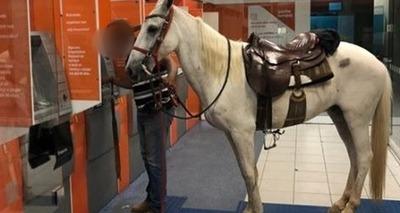 Thumb cavalo