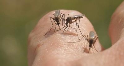 Thumb 1 bda malaria 5728347