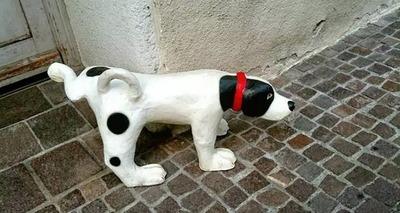 Thumb cachorro urina