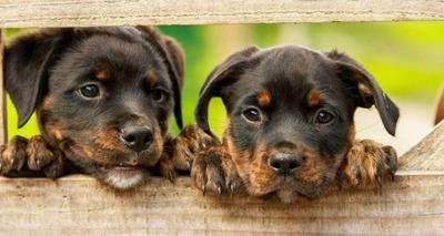 Thumb pets2