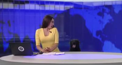 Thumb screenshot 2020 06 01 apresentadora se assusta com apari o de cachorro em telejornal 4