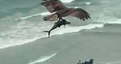 Thumb screenshot 2020 07 03 v deo mostra guia voando com tubar o nas garras