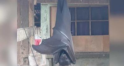 Thumb morcego gigante