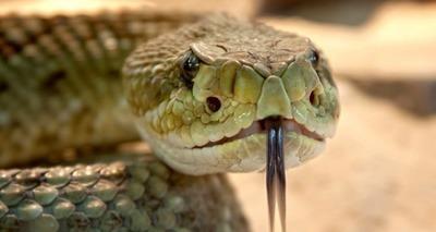 Thumb cobra
