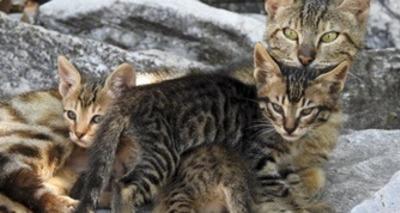 Thumb gatos 4