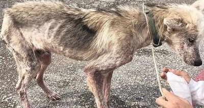 Thumb cachorro maltratado