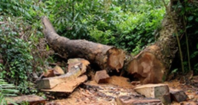 Thumb large mapadodesmatamento