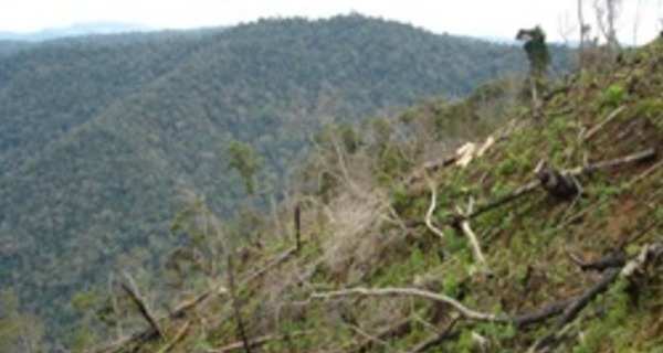 Medium large desmatamento