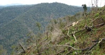 Thumb large desmatamento