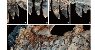 Thumb 21102020spectrovenator ragei fossil 1459