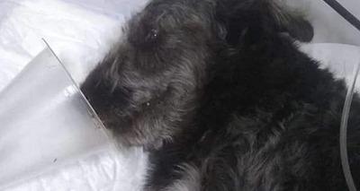 Thumb cachorro tufao picado por jararaca em sp 1 600x400