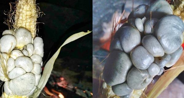 Medium destaque carv o do milho 1900x900 c