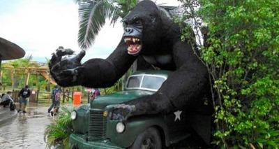 Thumb beto carrero parque gorila site  1140x760