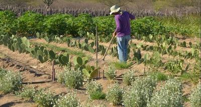Thumb produtor rural no semiarido