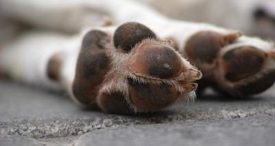 Thumb cachorro ataquee